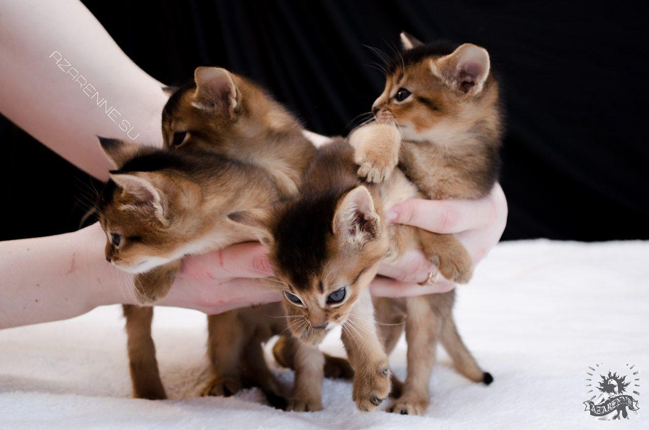 Фотограф домашних животных