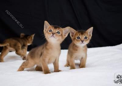 Фотограф кошек