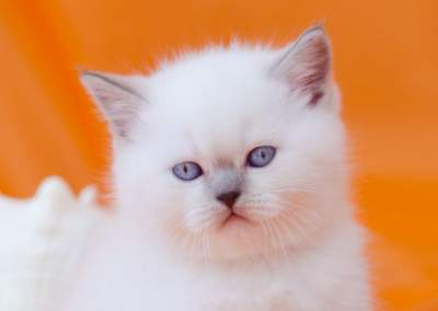 Фотограф кошек в Минске