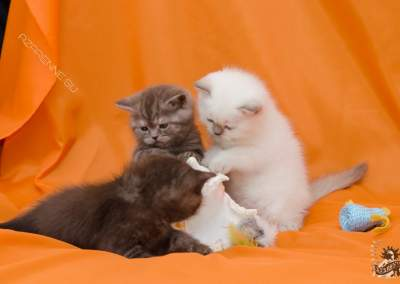 Фотосъёмка кошек для сайта