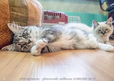 Фотосъёмка котят для продажи