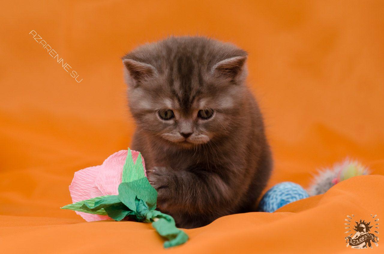 Кошачий фотограф